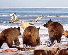 grizzlies-polars